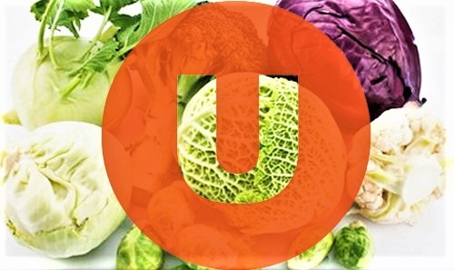Витамин U. Противоязвенный фактор. Содержание в продуктах и польза.
