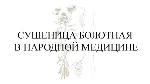 Сушеница болотная в народной медицине